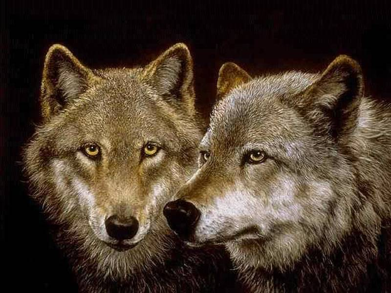Dva vuka